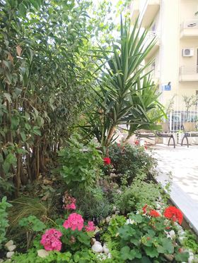 A flower garden with aromatic plants
